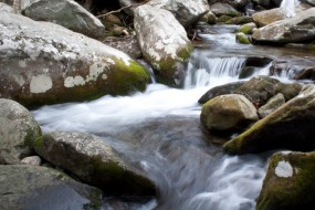 Streams at the Great Smoky Mountains