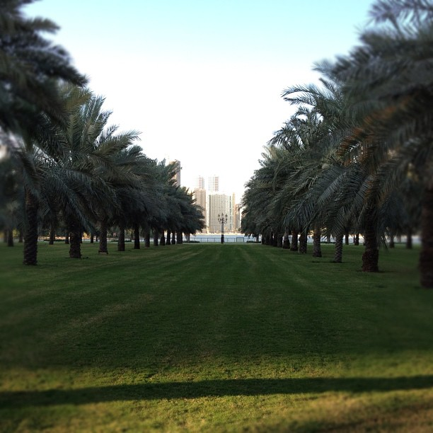 The Sharjah Corniche - A Nice Place For A Morning Run